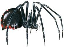 Here Are The Most Dangerous Spiders In The World