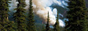 Tragedy strikes on Montana wildfire!