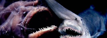 The Top 10 Creepiest Deep Sea Creatures That You Probably Didn't Know Existed