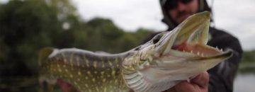 These Are The Top 5 Northern Pike Attacks & They're All Caught On Video