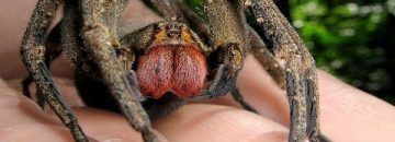 These Are 7 Nightmarish Spiders You'll NEVER Want To Encounter