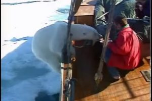 IDIOT ALERT: Norwegian Man Hand Feeds Wild Polar Bear