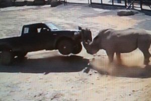 When A Rhino Charges....Just GET THE HECK OUT OF THE WAY DUMMY !!