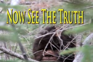 Sasquatch Is Real: Extraordinary Video Evidence