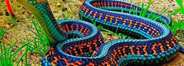 "Here Are The 10 Most Beautiful Snakes In The World (""beautiful""...really?!?)"