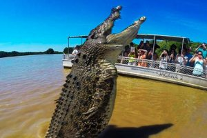 Here Are The BIGGEST Crocodiles In The World